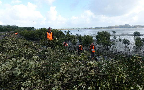 Wading birds on Watercare Coastal Walkway receive a helping hand from students