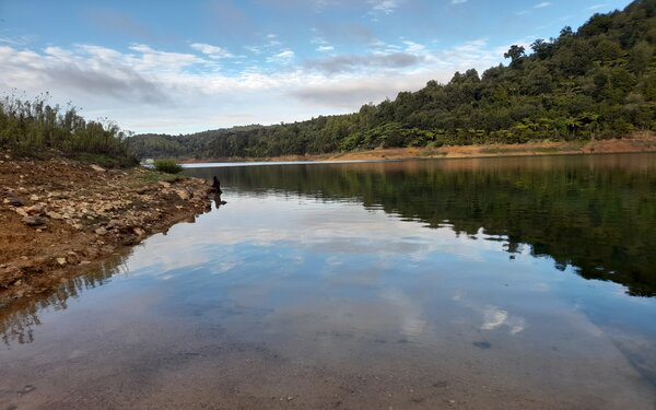 Dams approach half full, but Auckland's water supply is stable